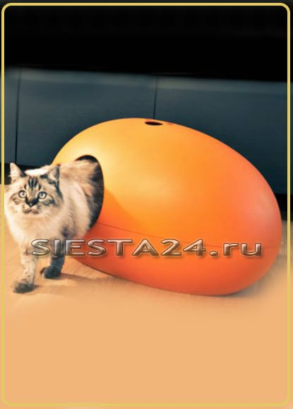 website for cats to play with